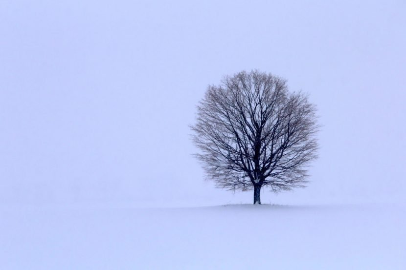 Seasonal Affective Disorder affects too many people every year, Counseling and Resource Center of Dearborn can help you through this Michigan winter.
